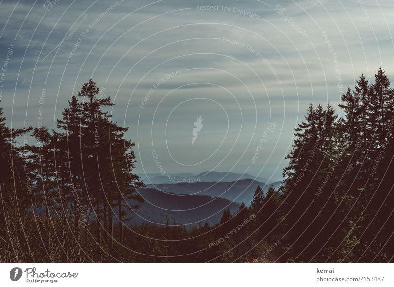 Schwarzwald Erholung ruhig Freizeit & Hobby Tourismus Ausflug Abenteuer Ferne Freiheit Natur Landschaft Pflanze Himmel Wolken Wetter Nebel Baum Hügel