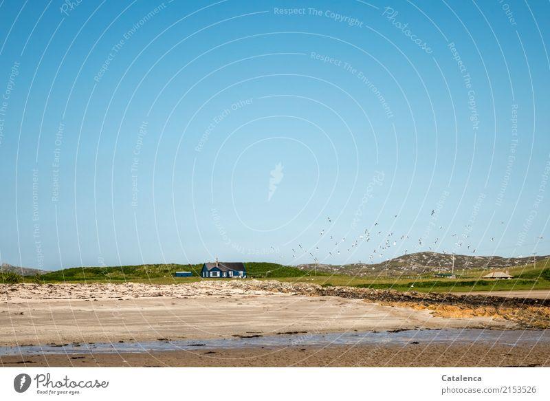 Schöner wohnen Freiheit Strand Wohnung Haus Traumhaus Hochspannungsleitung Landschaft Sand Wasser Wolkenloser Himmel Sommer Schönes Wetter Gras Dünengras Meer
