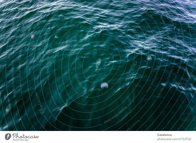 Quallig Natur Urelemente Wasser Sommer Schönes Wetter Wellen Meer Atlantik Hochsee Qualle Tiergruppe Schwimmen & Baden ästhetisch frei blau violett schwarz