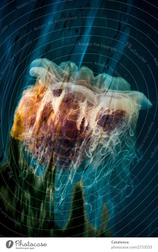 Jellyfish Natur Wasser Sommer Wellen Nordsee Meer Qualle 1 Tier Bewegung Schwimmen & Baden Flüssigkeit maritim weich blau grün orange schwarz türkis achtsam