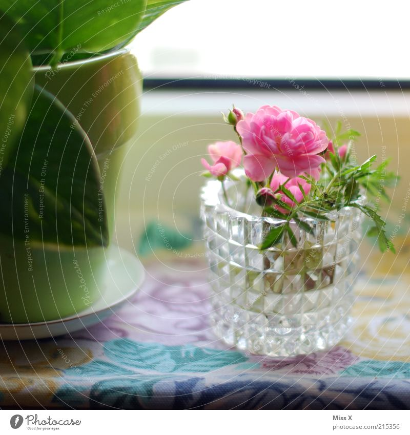 Blümchen für Luis alt Blume grün Blatt Blüte rosa Wachstum Dekoration & Verzierung Häusliches Leben zart Blühend Duft Blumenstrauß Vase Fensterbrett Pflanze