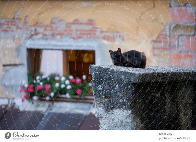 Einäugige Katze Katze alt Einsamkeit ruhig Fenster Wand Auge Mauer grau braun Angst Dach Verfall Ende Wachsamkeit Backstein