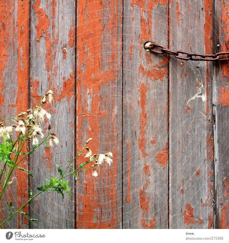 Jung & Alt alt grün Pflanze Farbe Blüte Farbstoff orange geschlossen Wachstum Blühend verfallen Hütte schäbig Kette Holzbrett Barriere