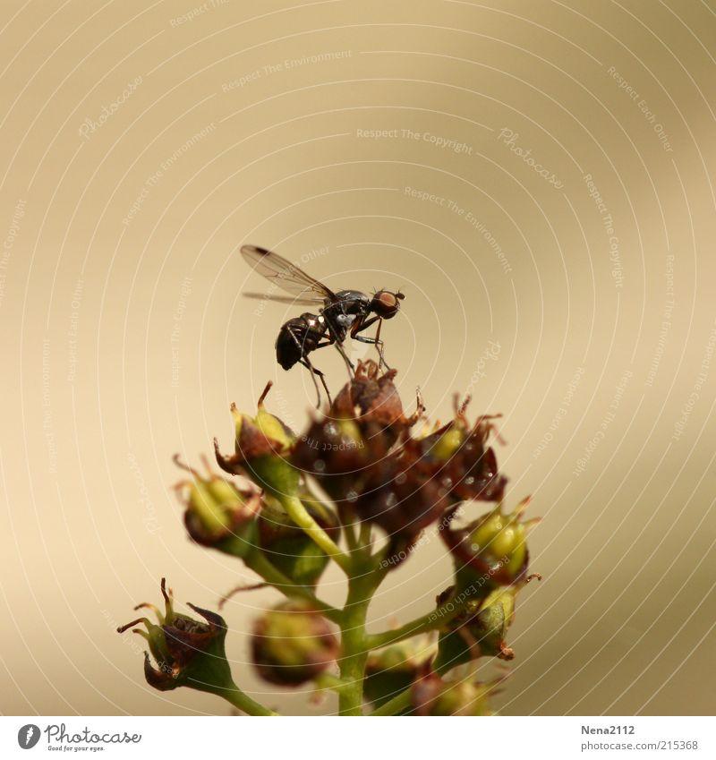 Ready to fly... Natur Blume Pflanze Tier Blüte klein Fliege hoch sitzen Sträucher Flügel Insekt Abheben Ameise Wildpflanze