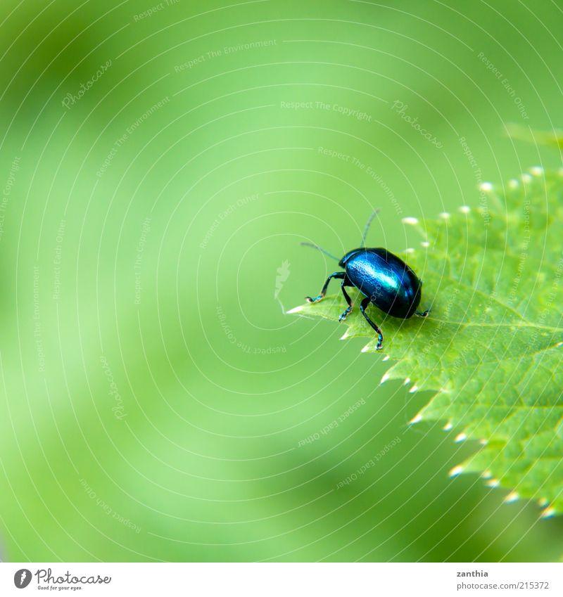 over the edge Natur grün blau Pflanze Sommer Blatt Ferne Tier Frühling Wege & Pfade klein warten sitzen Hoffnung Ende Sehnsucht