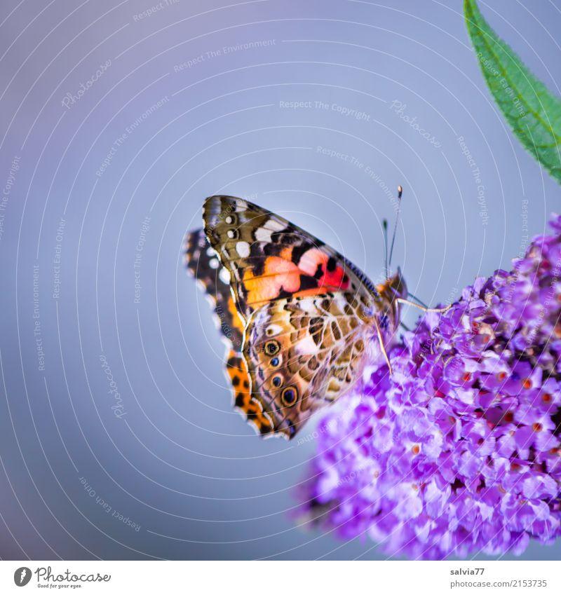 süßer Duft Natur Pflanze Sommer Farbe grün Blume Tier Blatt Blüte Liebe Garten grau orange ästhetisch Blühend