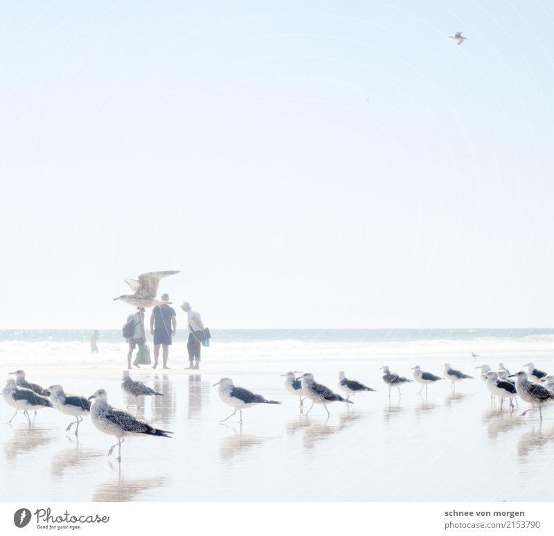 galant Meer Strand Mensch Wasser Sonne Sommer hell Ferne ruhig Zeit Ferien & Urlaub & Reisen Möwe Tier Vogel maritim Richtung Blick Schwimmen & Baden Gang
