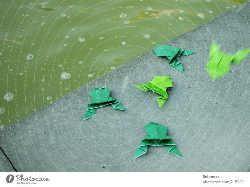 Auf dem Sprung Wasser Tier springen Spielen Stein Wege & Pfade klein Freizeit & Hobby Frosch Teich Basteln Textfreiraum links Origami Beckenrand