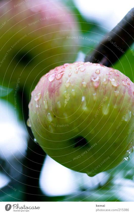 Nasser Glückwunsch-Apfel Natur Wasser Baum grün Pflanze rot Ernährung Herbst Regen Gesundheit Lebensmittel Umwelt nass Wassertropfen Frucht frisch