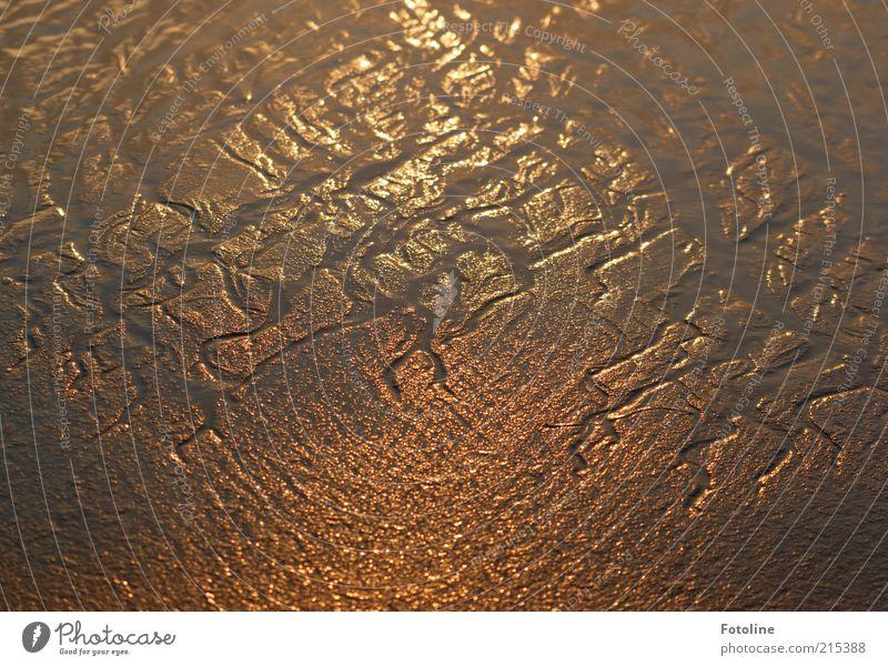 Priel Umwelt Natur Landschaft Urelemente Erde Wasser Sommer Küste Strand Nordsee Meer nass natürlich braun Wattenmeer glänzend Schlamm schlammig matschig