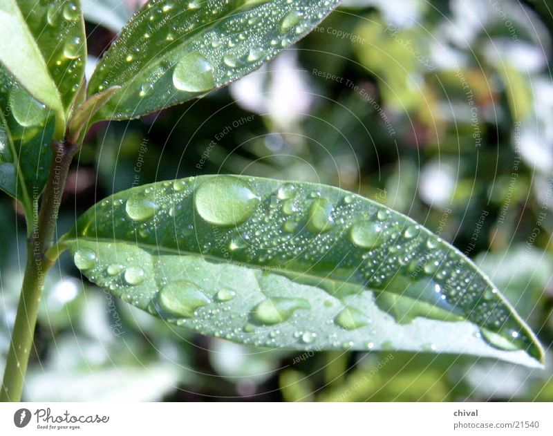 Regenblatt Sommer Blatt Garten Regen frisch