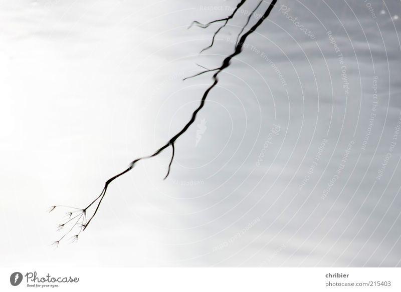 Ab Zweig ung Umwelt Natur Pflanze Wasser Sträucher Wellen Bach alt verblüht dehydrieren Wachstum nass grau schwarz ruhig Trauer Tod Endzeitstimmung