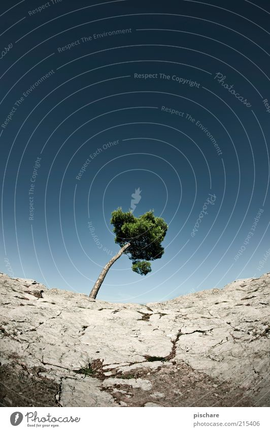 save the trees Natur Himmel Baum Sommer Einsamkeit Stein Landschaft Umwelt Felsen Wüste Vergänglichkeit einzeln Umweltschutz Blauer Himmel Dürre gekrümmt