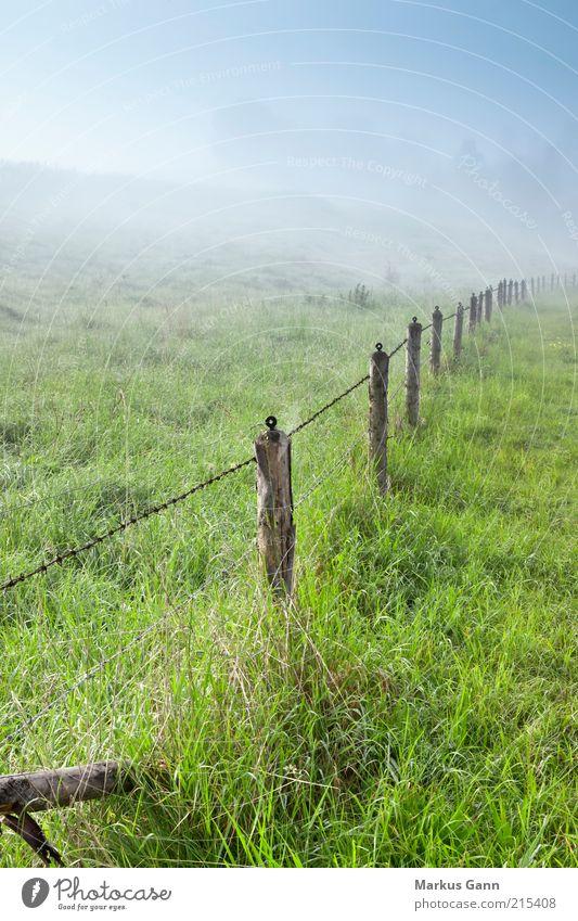 Morgennebel Natur Landschaft Luft Nebel Wiese grün Deutschland Morgendämmerung Stacheldrahtzaun Zaun Zaunpfahl Bayern Farbfoto Gedeckte Farben Außenaufnahme