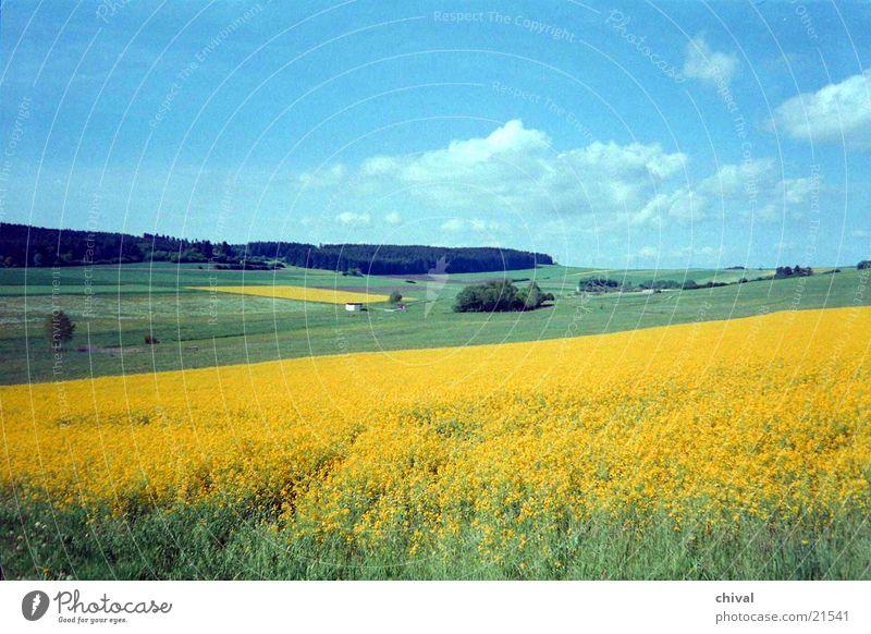 Sommerlandschaft Wolken Wald Wiese Feld Rapsfeld