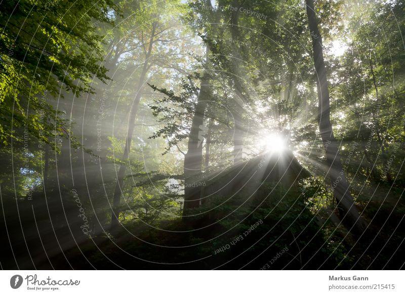 Lichtstrahlen im Wald Natur grün Baum Pflanze Sonne Blatt dunkel Landschaft grau Luft Wetter Nebel Hütte schlechtes Wetter Lichtspiel