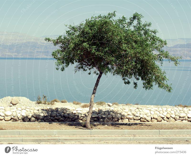 Der letzte Baum am toten Meer Natur Wasser Baum Meer Sommer Einsamkeit Leben Mauer Wärme Landschaft Wetter Umwelt Wachstum einfach Klima Schönes Wetter