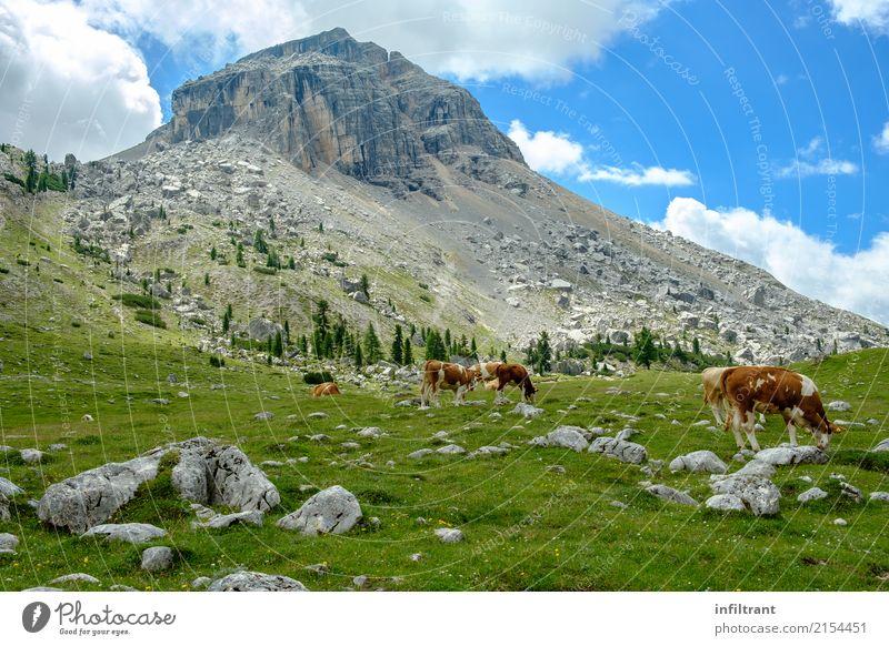 In den Dolomiten Ferien & Urlaub & Reisen Freiheit Berge u. Gebirge wandern Landschaft Wolken Gras Wiese Hügel Felsen Alpen Gipfel Italien Nutztier Kuh Kuhherde