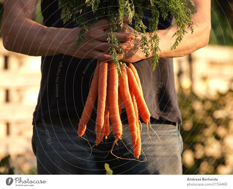 Frisch gerntet Gemüse Bioprodukte Vegetarische Ernährung Lifestyle Sommer Mensch maskulin Gesundheit organic Landwirt vegetable healthy farm garden green