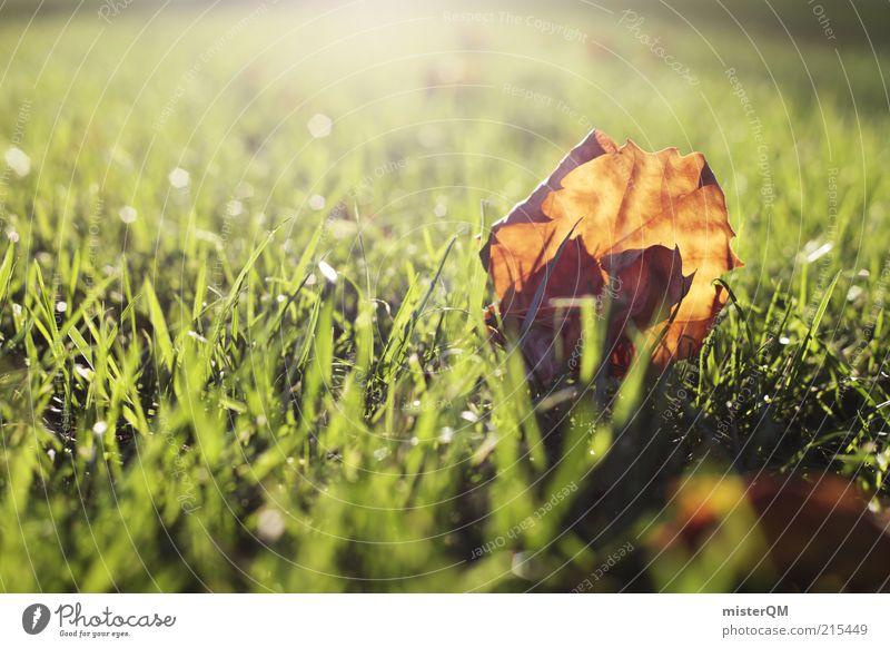 Herbstlicht. Natur ruhig Blatt Gras braun Umwelt ästhetisch Rasen Jahreszeiten November Herbstlaub Grasnarbe Lichteinfall welk Lichtschein