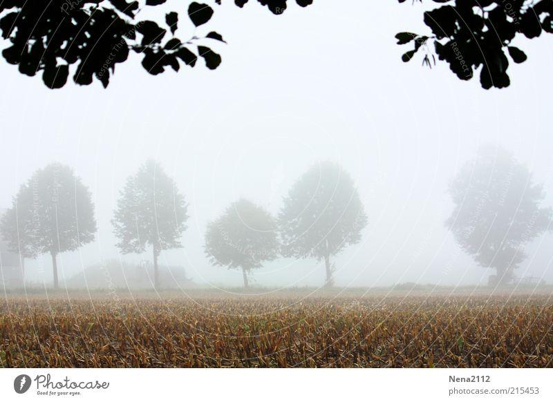 Vernebelt... Natur Himmel weiß Baum Blatt kalt Herbst Landschaft hell Feld Nebel Wetter Umwelt nass Erde frisch