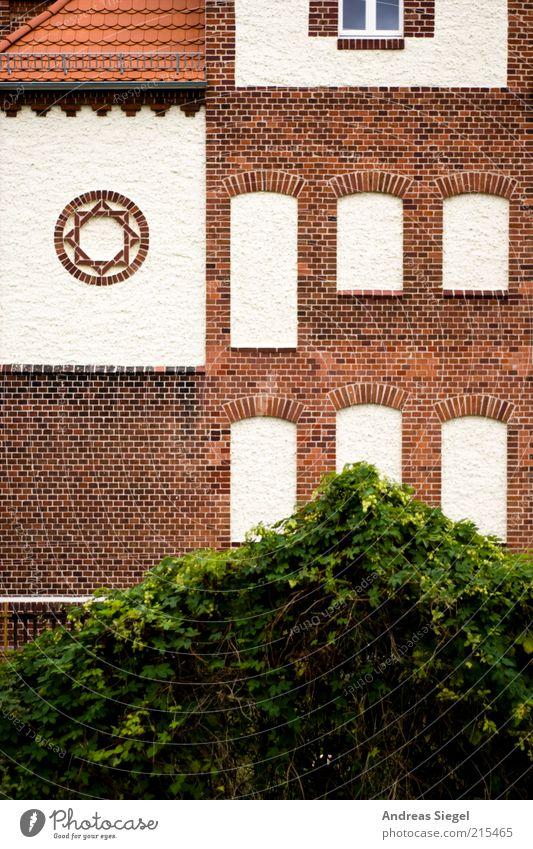 Schwartzkopff Natur weiß grün Pflanze Haus Wand Fenster Stein Mauer Landschaft braun Architektur Fassade Sträucher Dach
