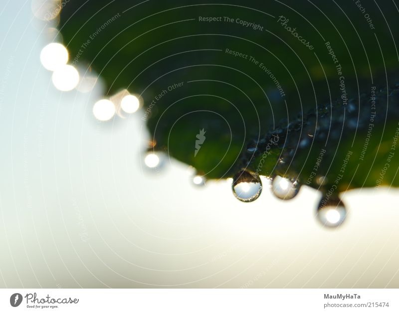 Tropfen pro Blatt Natur Pflanze Urelemente Luft Wasser Wassertropfen Himmel Horizont Sonne Sonnenlicht Herbst Coolness Optimismus Macht Tatkraft elegant Energie