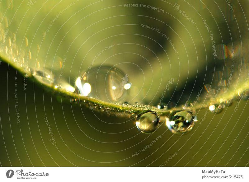 Natur Wasser Pflanze Sonne Blatt Ferne Erholung Herbst Leben kalt Gras Stil Kunst Kraft Wassertropfen Klima