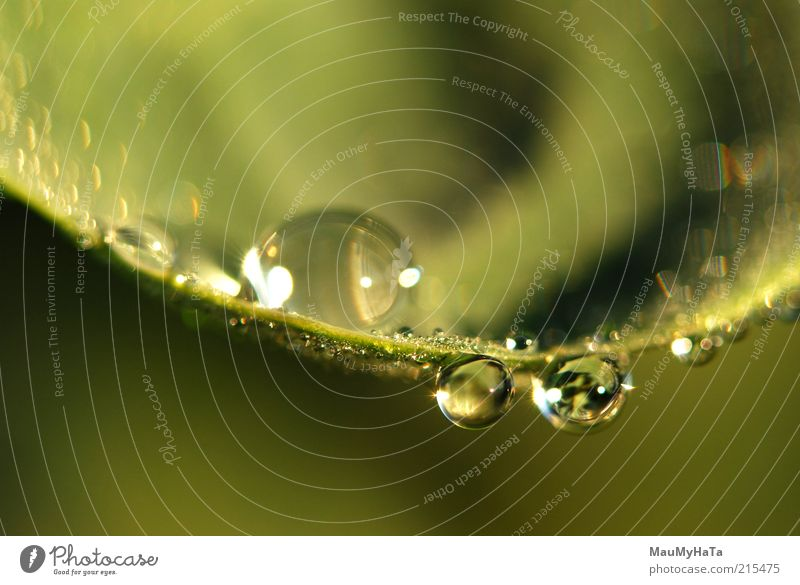 Wassertropfen Natur Pflanze Urelemente Sonne Sonnenlicht Herbst Klima Gras Blatt Erholung exotisch Idee kalt Kunst Leben Ferne Reichtum Kraft Stil Farbfoto
