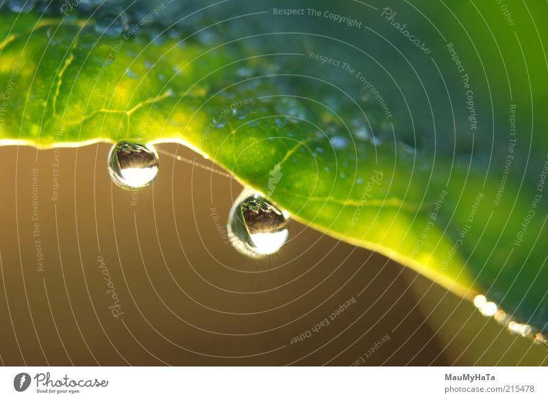 Wassertropfen auf dem Blatt Natur Pflanze Urelemente Himmel Horizont Sonne Sonnenaufgang Sonnenuntergang Sonnenlicht Herbst Klima Gras bezahlen drehen entdecken