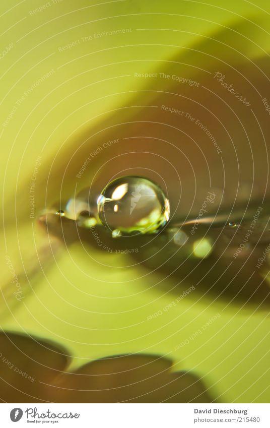 Art of raindrops Natur Pflanze Wasser Wassertropfen Herbst Blatt braun grün nass feucht Tau rund Kugel herbstlich Herbstfärbung Farbfoto Außenaufnahme