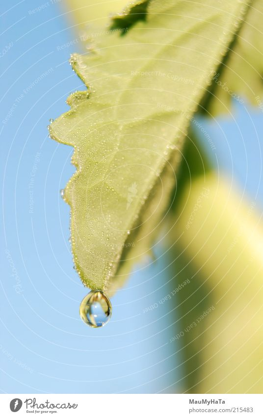 Tropfen Lebensmittel Natur Pflanze Urelemente Wasser Wassertropfen Himmel Horizont Sonne Sonnenaufgang Sonnenuntergang Sonnenlicht Klima Regen Gras Blatt