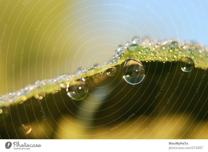 Zwei Tropfen, zwei Augen Natur Pflanze Urelemente Wasser Wassertropfen Himmel Sonne Sonnenaufgang Sonnenuntergang Sonnenlicht Herbst Klima Regen Gras Blatt gut