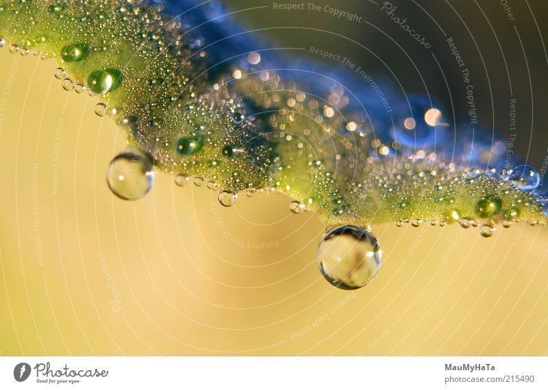 Tropfen Natur Pflanze Urelemente Wasser Wassertropfen Sonne Sonnenaufgang Sonnenuntergang Sonnenlicht Herbst Klima Regen Gras Blatt blau braun gelb gold grün