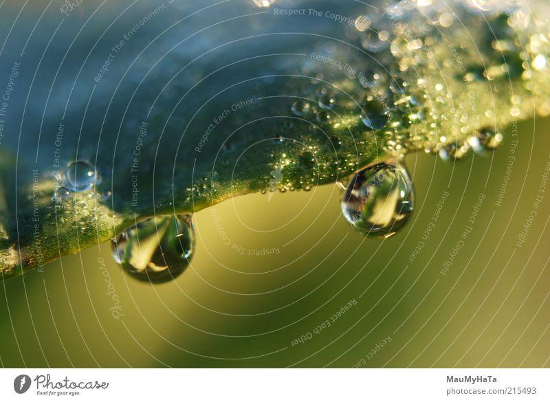 Tropfen Natur Pflanze Urelemente Wasser Wassertropfen Sonne Herbst Klima Regen Gras Blatt blau mehrfarbig gelb gold grün silber Farbfoto Nahaufnahme