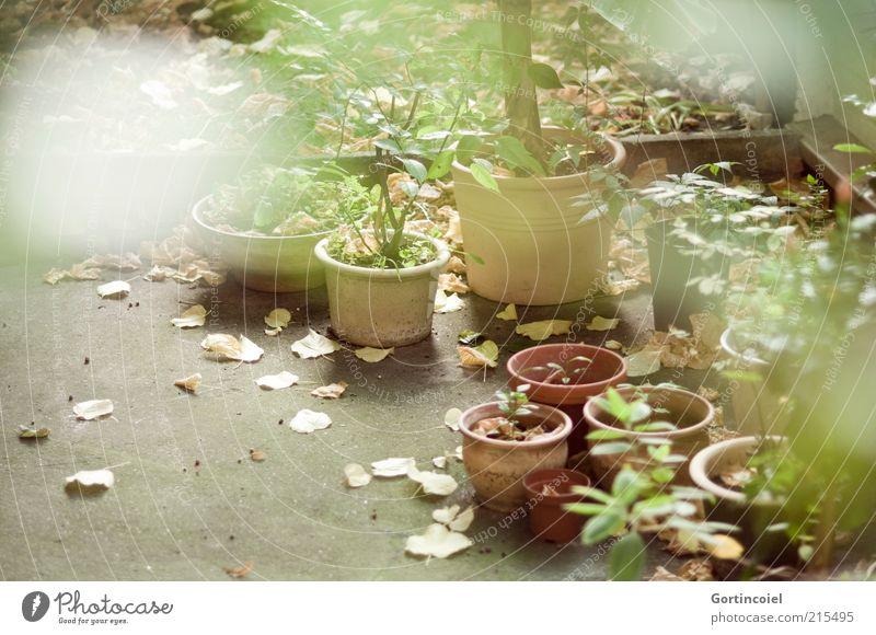 Herbsthof Natur Pflanze Blatt Topfpflanze Garten trist Hof herbstlich Herbstlaub Blumentopf viele Menschenleer Idylle Farbfoto Außenaufnahme Tag