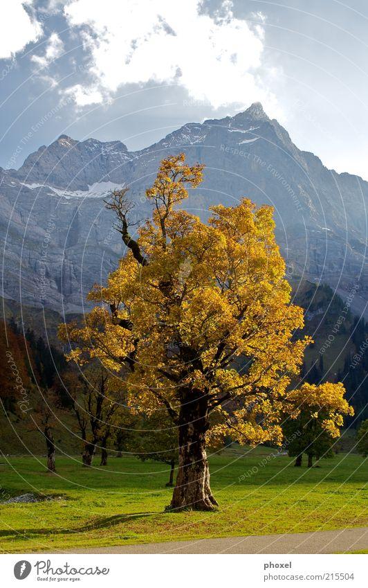Ahornbaum Natur alt Baum rot Wolken Umwelt Landschaft Herbst Berge u. Gebirge braun groß Alpen Schönes Wetter Mitte Schneebedeckte Gipfel
