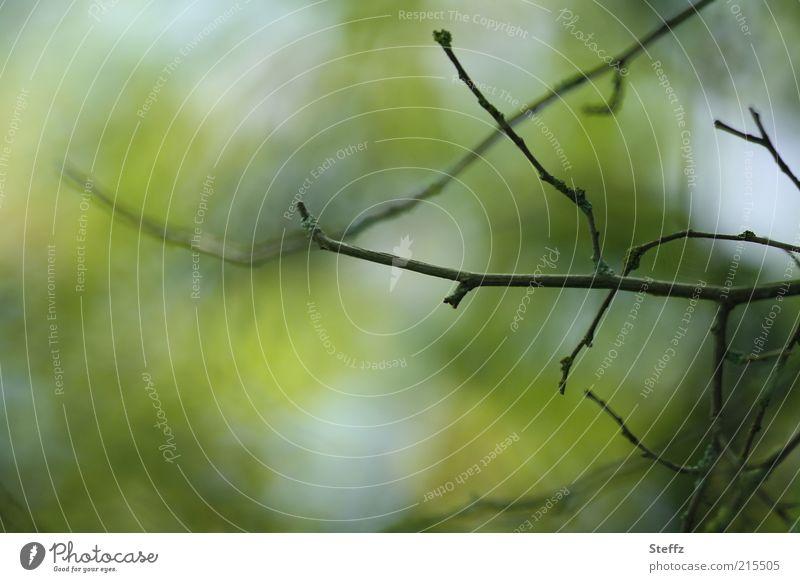 Herbstbeginn Natur Pflanze Ast Zweig Herbstwetter herbstlich Oktober trist grün Stimmung Vergänglichkeit Herbstgefühle Farbe Umwelt Wandel & Veränderung laublos