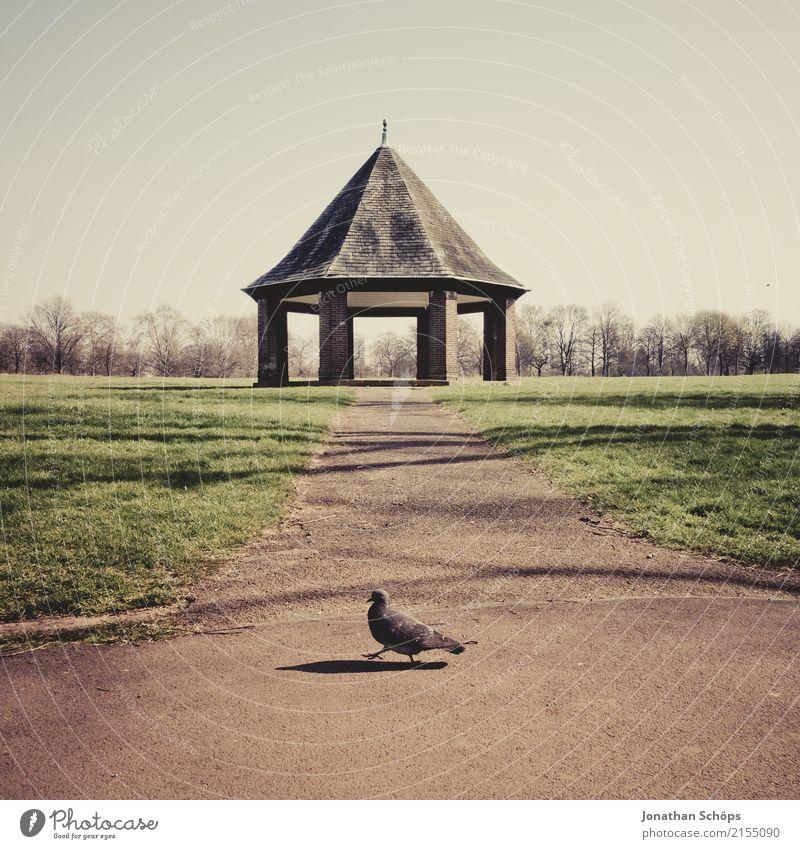 Taube läuft von rechts nach links Natur Landschaft Tier Reisefotografie Umwelt Wiese Gebäude Vogel Freizeit & Hobby Park laufen Mitte London England