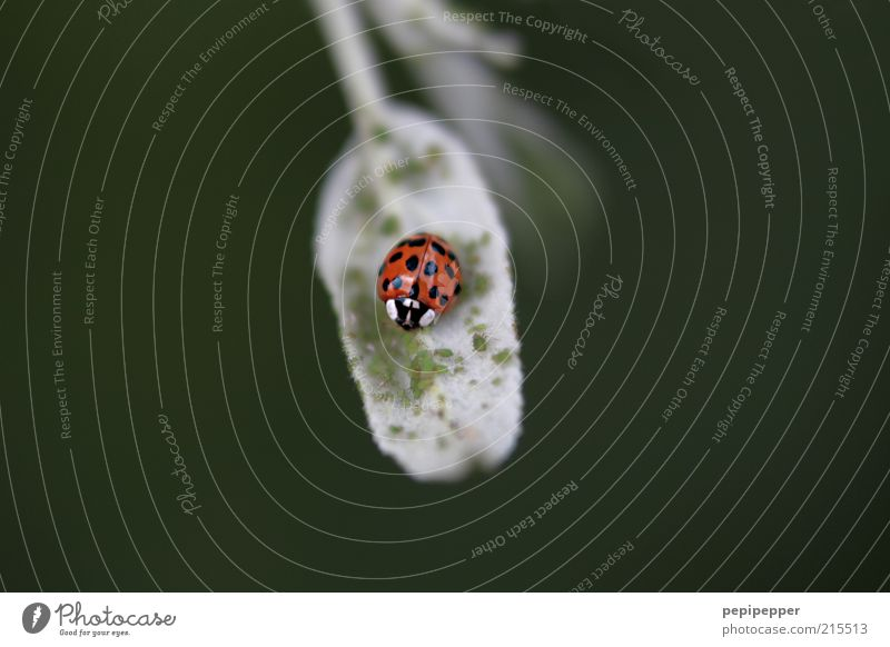 das grosse fressen Pflanze Sommer Blatt Tier Käfer Flügel 1 grün rot Natur Gedeckte Farben Außenaufnahme Nahaufnahme Makroaufnahme Muster Morgendämmerung