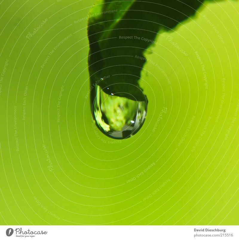 Green world Leben harmonisch ruhig Natur Pflanze Wasser Wassertropfen Frühling Sommer Blatt Grünpflanze grün nass feucht rund Tropfen glänzend Farbfoto