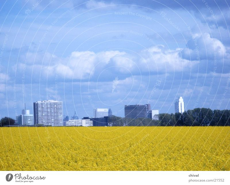 Rapsfeld Himmel blau Wolken gelb Frankfurt am Main Hessen Eschborn