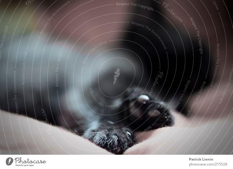 was für ein Leben schön Tier Erholung Katze Zufriedenheit Stimmung Sicherheit weich einfach liegen Vertrauen außergewöhnlich genießen gemütlich Pfote Geborgenheit