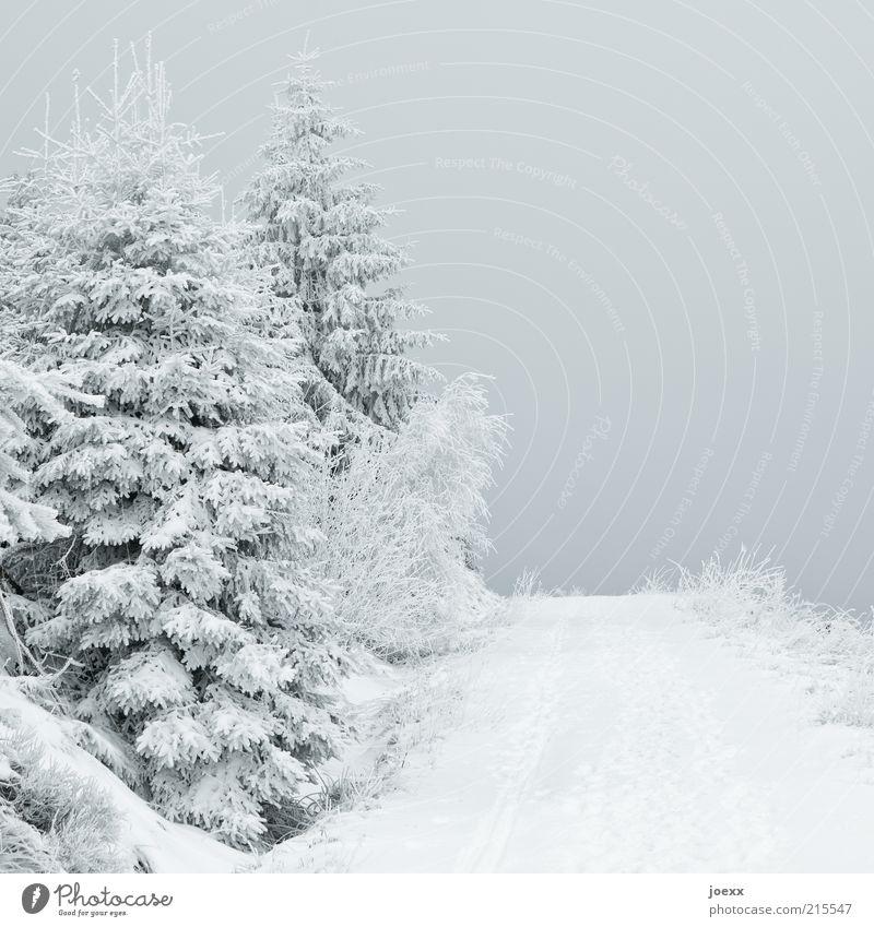Düstere Aussicht Natur Himmel Baum ruhig Wald Schnee Wege & Pfade Landschaft Eis Frost Tanne Schneelandschaft Schneedecke