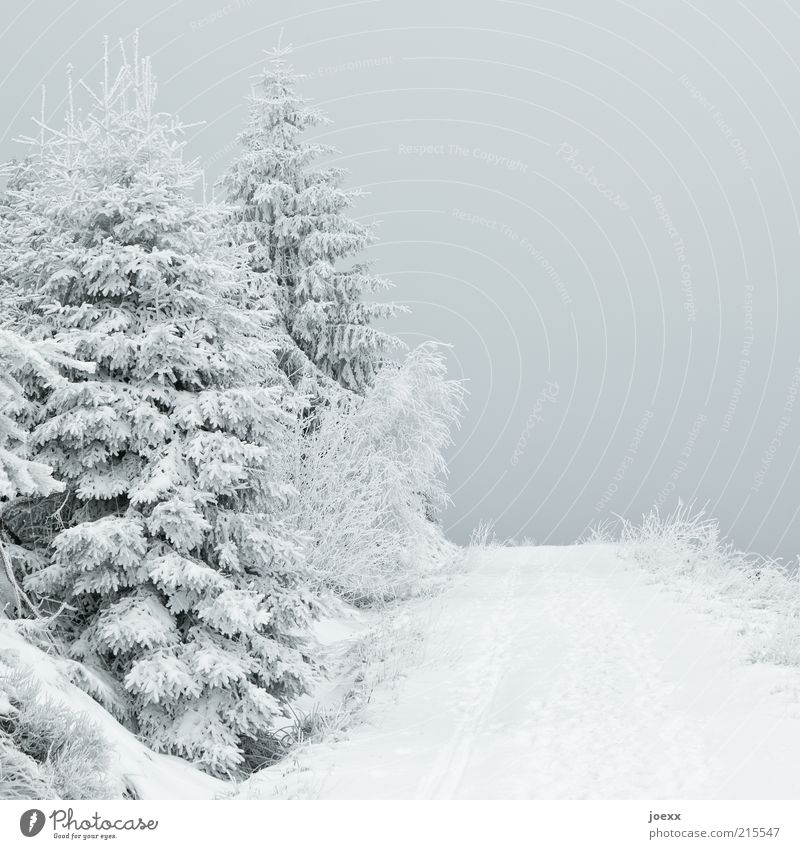 Düstere Aussicht Natur Himmel Eis Frost Schnee Baum Wald Wege & Pfade ruhig Schneelandschaft Farbfoto Gedeckte Farben Außenaufnahme Menschenleer Tag