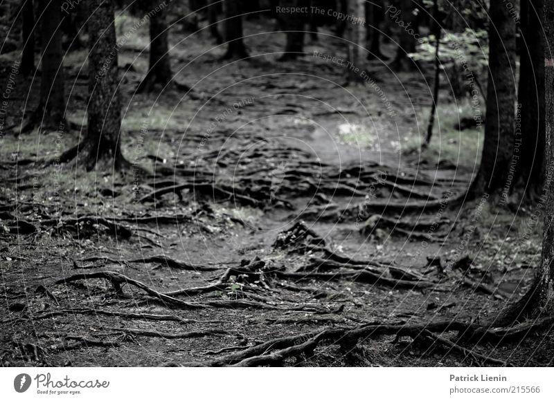 Wurzelwald Natur Baum Pflanze Wald dunkel Herbst Wege & Pfade Landschaft Stimmung Umwelt nass Erde Wachstum Glätte unheimlich Bildausschnitt