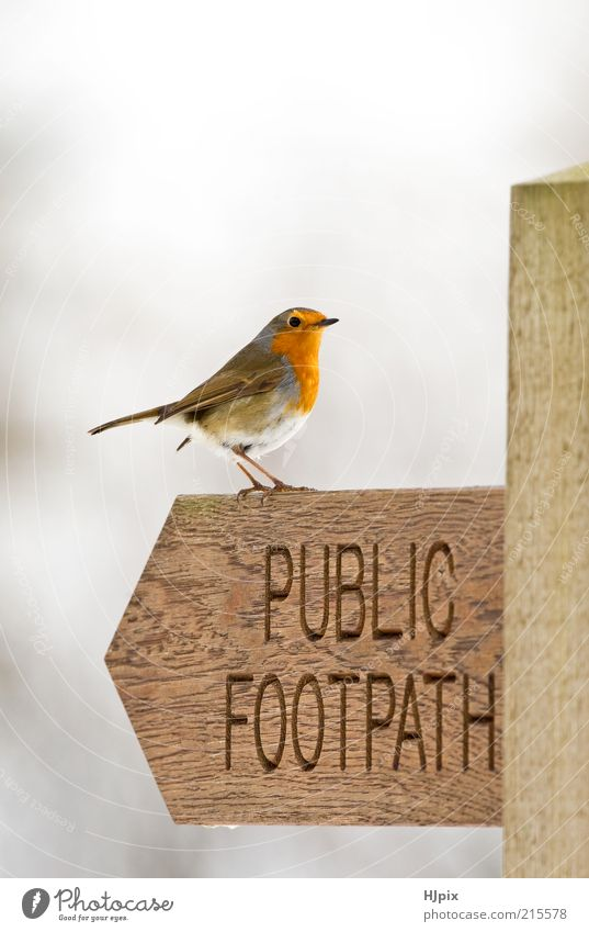 Natur Tier Holz Vogel Zeichen Verkehrszeichen Licht