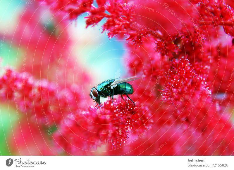 borstig Natur Pflanze Tier Sommer Schönes Wetter Blume Blatt Blüte Prachtspiere Garten Park Wiese Wildtier Fliege Tiergesicht Flügel 1 beobachten Blühend Duft