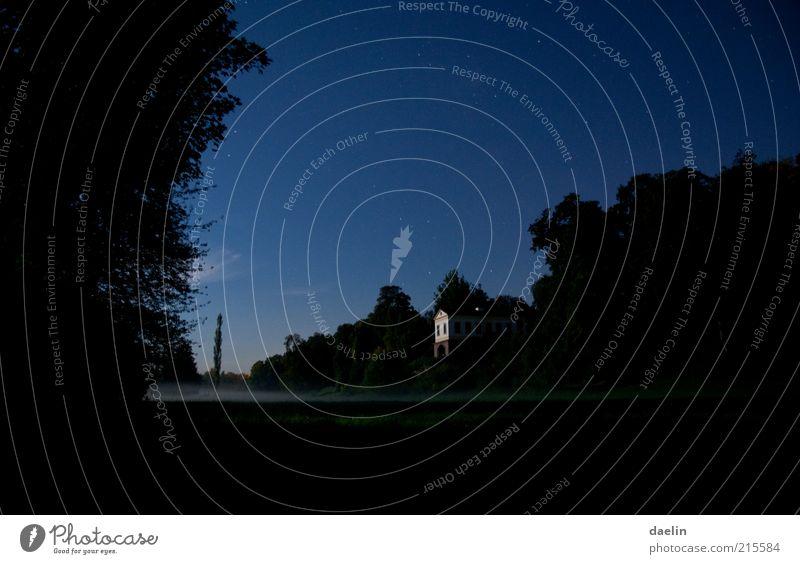 Park at Night (Ilmpark Weimar) ästhetisch Nacht Abend Nachthimmel Stern Sternenhimmel Mondschein Baum Nebel Nebelschleier Farbfoto Außenaufnahme Bodennebel
