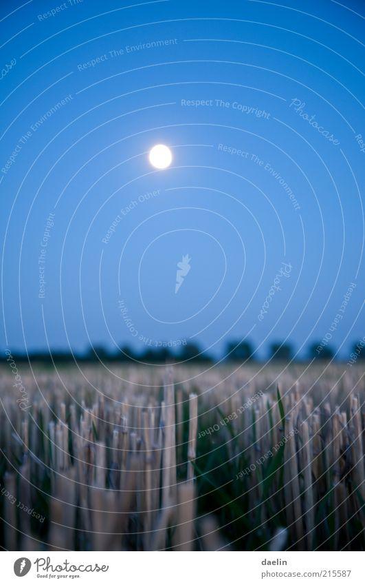 field at night Landschaft Herbst Feld blau Ernte Weizen Weizenfeld Abend Abenddämmerung Nacht Mond Mondschein Himmel Nahaufnahme Farbfoto Menschenleer Vollmond